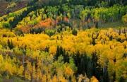 Telluride-Colors