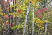Letchworth-State-Park-Colors-1