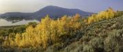 Wyoming-Aspens-Pano