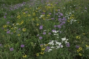 Hill-City-Wildflowers