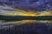 Piedmont-Pond