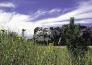 Rushmore-Flowers