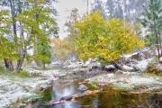 Winter-in-Custer-Park