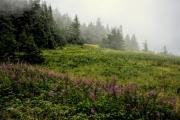 Oregon-Mist-2